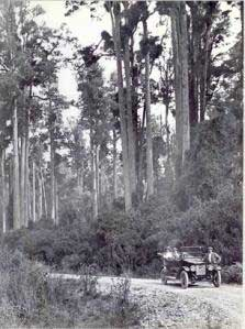 Figure 1: Totara Reserve about 1915, photo by C. E. Wildbore. Palmerston North City Library.